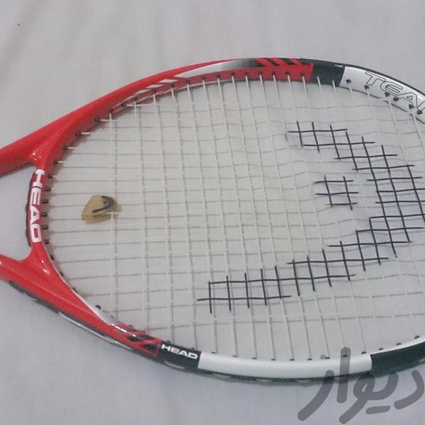 تنیس|ورزشهای توپی|کرج، درختی|دیوار
