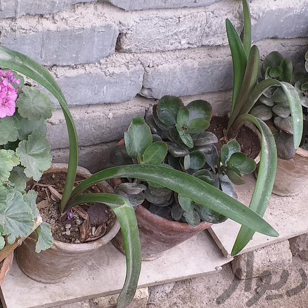 گل طبیعی شاداب|تزئینی و آثار هنری|ارومیه|دیوار