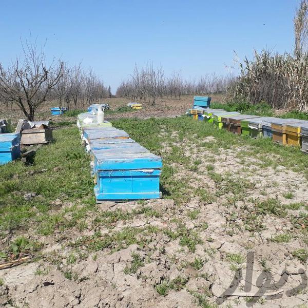 عسل طبیعی رویین دژ عمده فروشی بجنورد دیوار